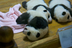 Baby panda. Sleeping just borned stock image