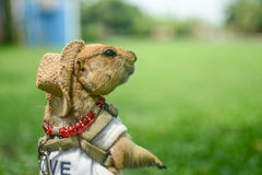 Baby parrydog Royalty-vrije Stock Afbeelding