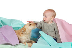 Baby patting the family dog. Adorable young baby sitting on the floor amidst sheets of pastel coloured paper patting and stroking the family pet, a jack russel Royalty Free Stock Image