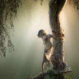 Baby-Pavian im Baum Lizenzfreies Stockfoto