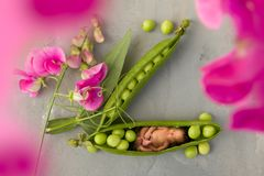 Baby in pea pod. Adorable baby sleeping in a pea pod with sweet pea flowers stock image
