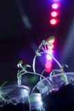 Baby tomatoes under a LED grow lamp Royalty Free Stock Images