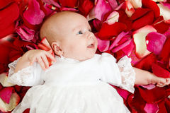 Baby in petals Royalty Free Stock Photo