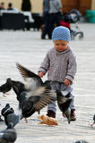 Baby with pigeons Stock Photography
