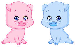 Baby pigs Stock Image