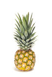 Baby pineapple Royalty Free Stock Photo