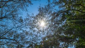 Sun on blue sky above green trees royalty free stock image
