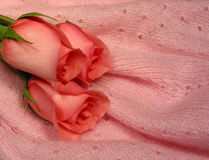 Baby pink. Pink roses on pink soft mohair Stock Image