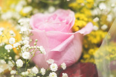 Baby pinkrose - high detailed. Romantic pink rose from a gift Royalty Free Stock Images
