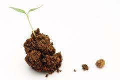 Baby plant Royalty Free Stock Photo