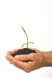 Baby plant grow in hand Royalty Free Stock Photography