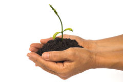 Baby plant grow in hand Royalty Free Stock Image