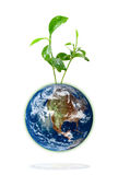 Baby plant growing from the earth Stock Photo