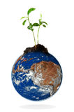 Baby plant growing from the earth Royalty Free Stock Photography