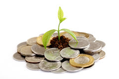 Baby plant growing on Indian currency Stock Image