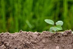 Earth environmental and earth agriculture concept, nature concept. stock photography