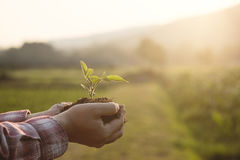 Baby plant on hand with agriculture Field background. royalty free stock images