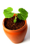 Baby plant-New life Stock Photography