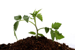 Baby plant-New life Stock Photo