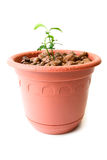Baby plant in small flower pot Royalty Free Stock Photo