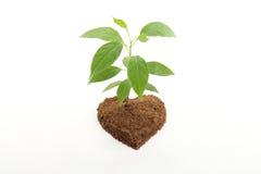 Baby plant on white Royalty Free Stock Photos