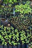 Baby plants Stock Image