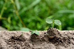 Business/Finance on nature plants concepts. stock photos
