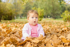 Baby playing with autumn leaves Stock Images