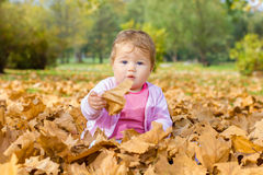 Baby playing with autumn leaves Royalty Free Stock Photos