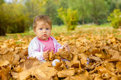 Baby playing with autumn leaves Stock Photography