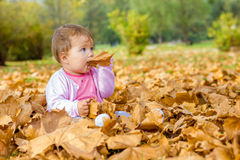 Baby playing with autumn leaves Stock Image