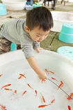 Baby playing with goldfish Royalty Free Stock Photo