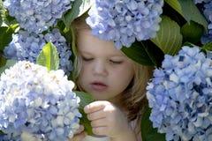 Baby playing in purple chrysanthemum Royalty Free Stock Photos