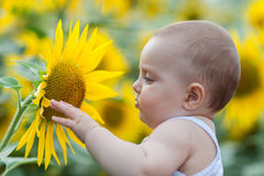 Baby playing with sunflower Royalty Free Stock Images