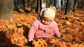 Baby plays with Autumn leaves in the park stock video footage
