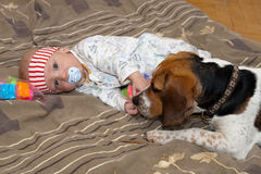 Baby plays with a dog Stock Photos