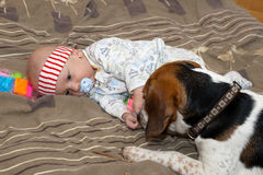 Baby plays with a dog Royalty Free Stock Photo