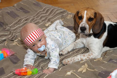 Baby plays with a dog royalty free stock images