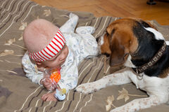 Baby plays with a dog Royalty Free Stock Image