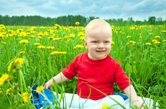 Baby  plays on a green meadow with dandelions Royalty Free Stock Image