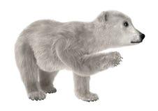 Baby Polar Bear Stock Image