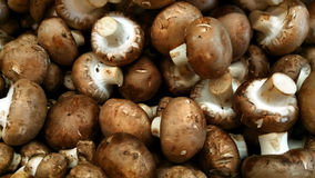 Baby Portebello Mushrooms. Organic baby portebello mushrooms raw healthy and ready to cook Royalty Free Stock Image