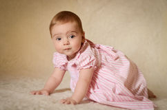 Baby Portrait. A portrait of a cute caucasian baby or toddler on smooth background Royalty Free Stock Images