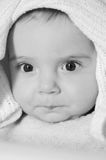Baby Portrait. A portrait of a cute caucasian baby or toddler on smooth background Stock Image