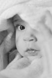 Baby Portrait Stock Photography