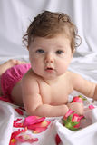 Baby Portrait with rose petals Stock Images