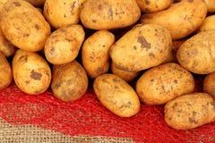 Baby potatoes Stock Photos