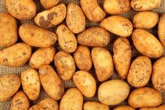 Baby potatoes Royalty Free Stock Photography