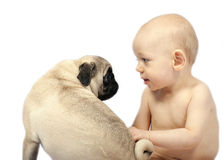 Baby and pug puppy. 12 month old baby and a 6 month old pug puppy stock image