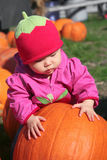Baby Pumkin Patch. Baby at a pumpkin patch Royalty Free Stock Image